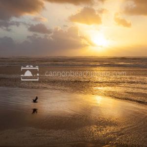 Seagull Flight Thru Sunset Frame