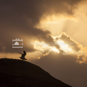 Seagull Lift Off Silhouetted by Sun