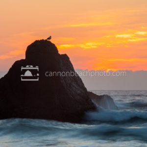Seagull Rock Perch at Sunset
