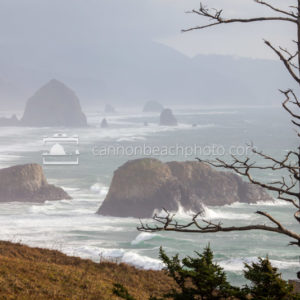 Tree Scrag at Ecola Point in Storm Light