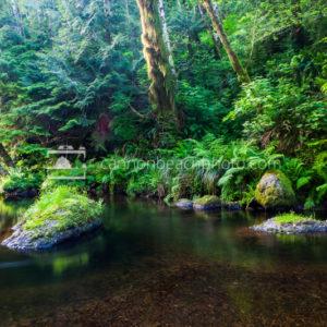 Ecola Creek Peaceful Islands