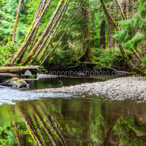 Ecola Creek Leaning Trees Reflection