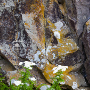 Rock Texture and Plants, Vertical