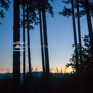 Backlit Trees and Crescent Moon