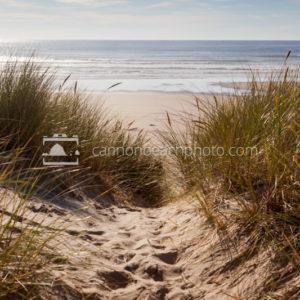 Beach Path Thru Sunny Dunes