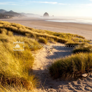 Sunny Dune View of Cannon Beach, Vertical