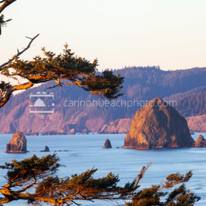 Haystack Rock Framed by a Pine Tree, Silver Point Oregon Coast