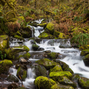 Oregon Forest Creek Falls