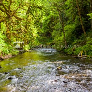 Creek thru the Woods
