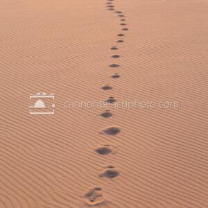 Footsteps thru the Dunes, Vertical