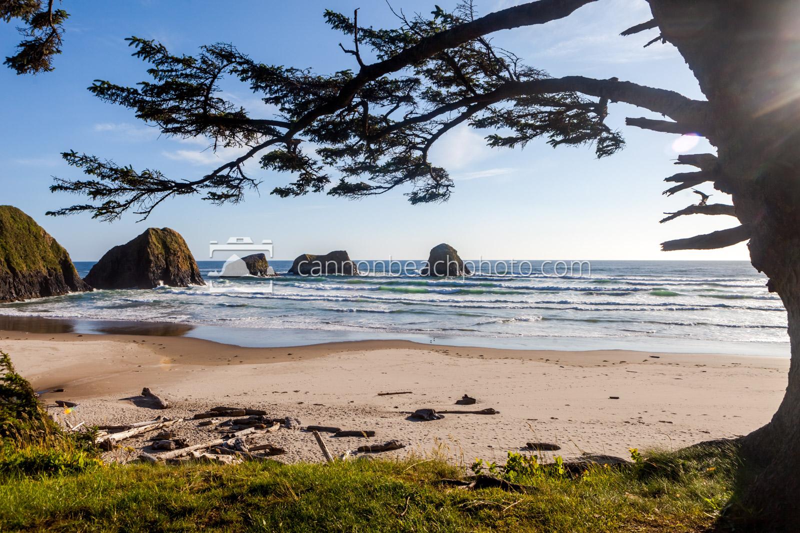 Crescent Beach Tree Frame