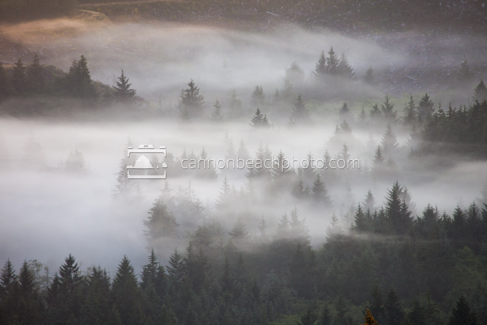 Mist in the Trees from Above