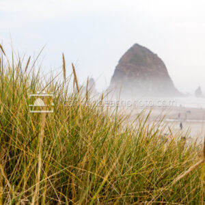 Misty Haystack Framed by Dune Grass