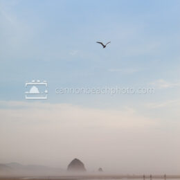Single Seagull Flight Over Haystack Rock