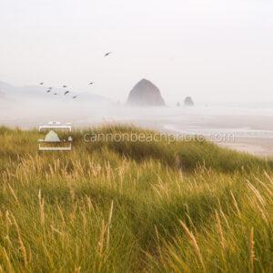 Vertical Dune View, Foggy Day with Bird Flight