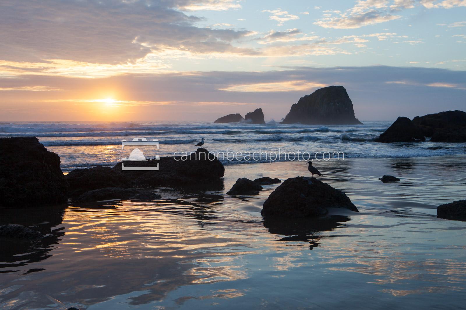 Seagull Sentinels at Sunset