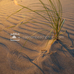 Dune Grass Studio