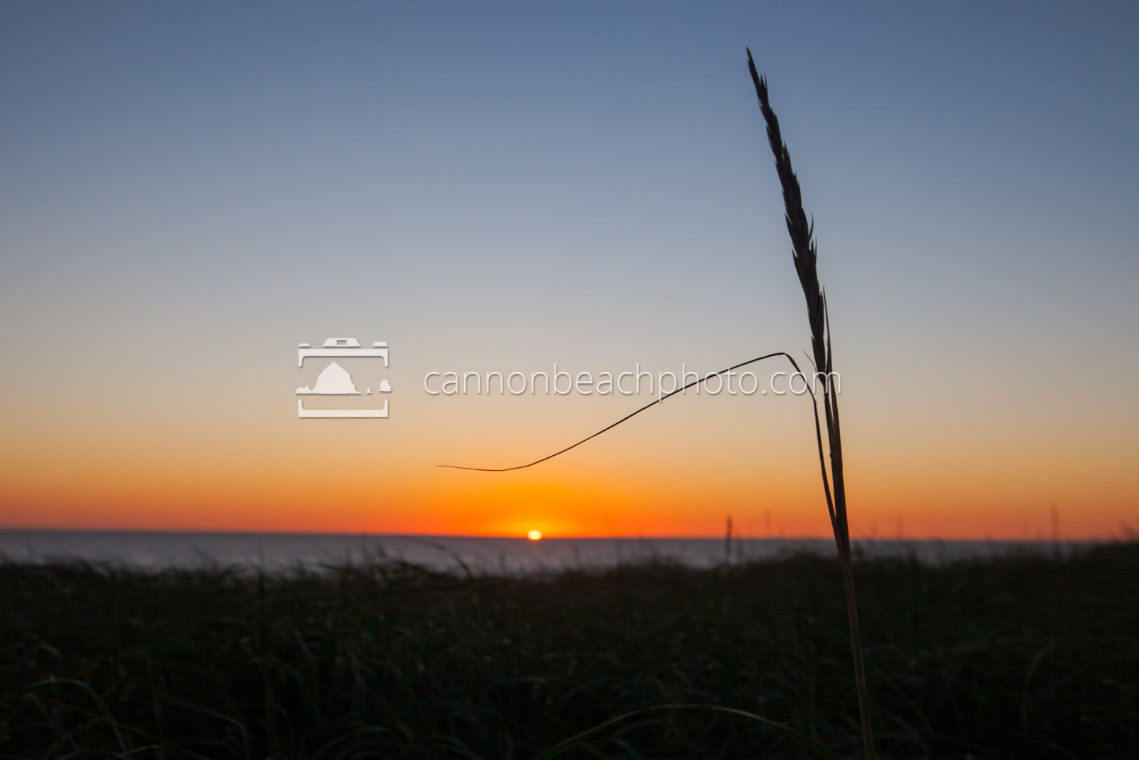 Dune Stalk at Sunset