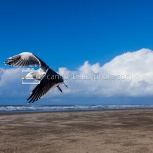 Seagull Flight at Seaside Turn-Around