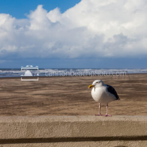 Seagull Perch on Seaside Turn-Around