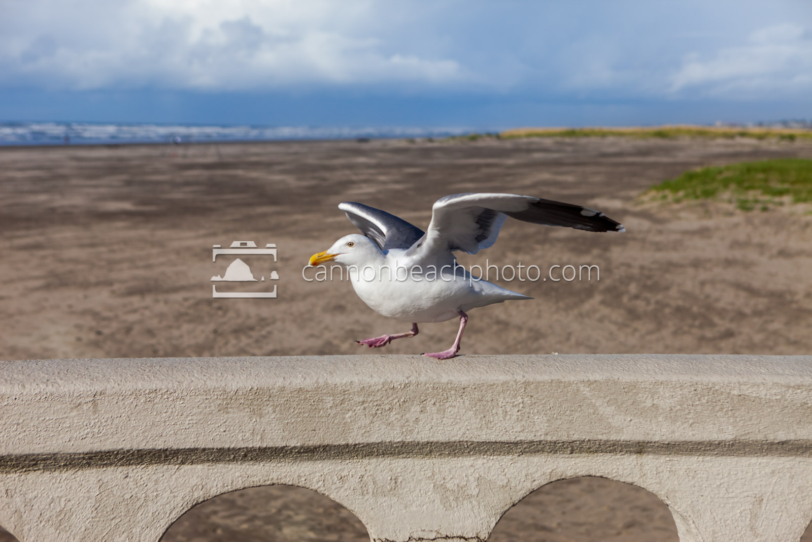 Seagull Taking Off at Seaside Turn-Around