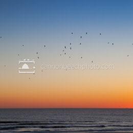 Twilight Seagulls, Vertical