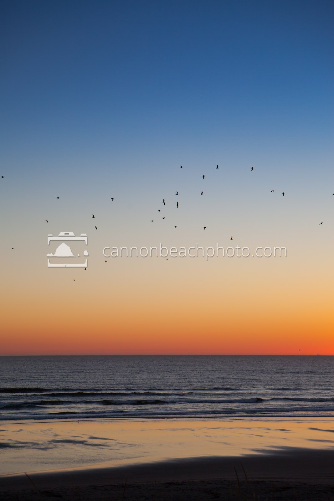 Twilight Seagulls, Vertical