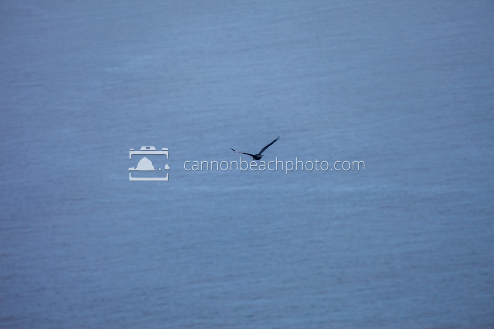 Crow Flight - Pacific Ocean