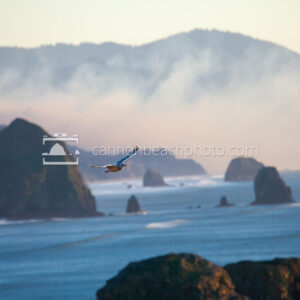 Seagull Flying with Haystack Zoomed Behind