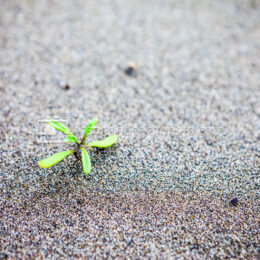 Growth in Sand