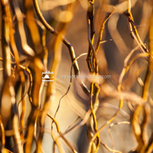 Thru the Branches, Vertical