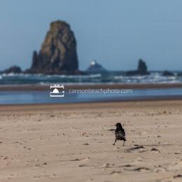 Crow on the Beach with Needle, Horizontal