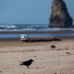 Crow on the Beach with Needle, Vertical