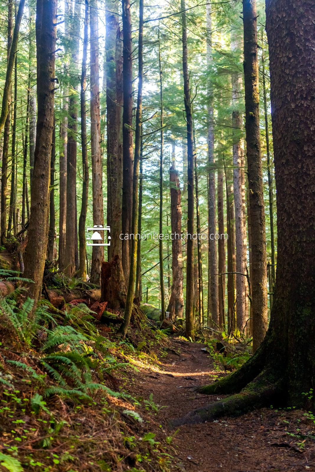 Neahkahnie Mountain Forest Trail 1