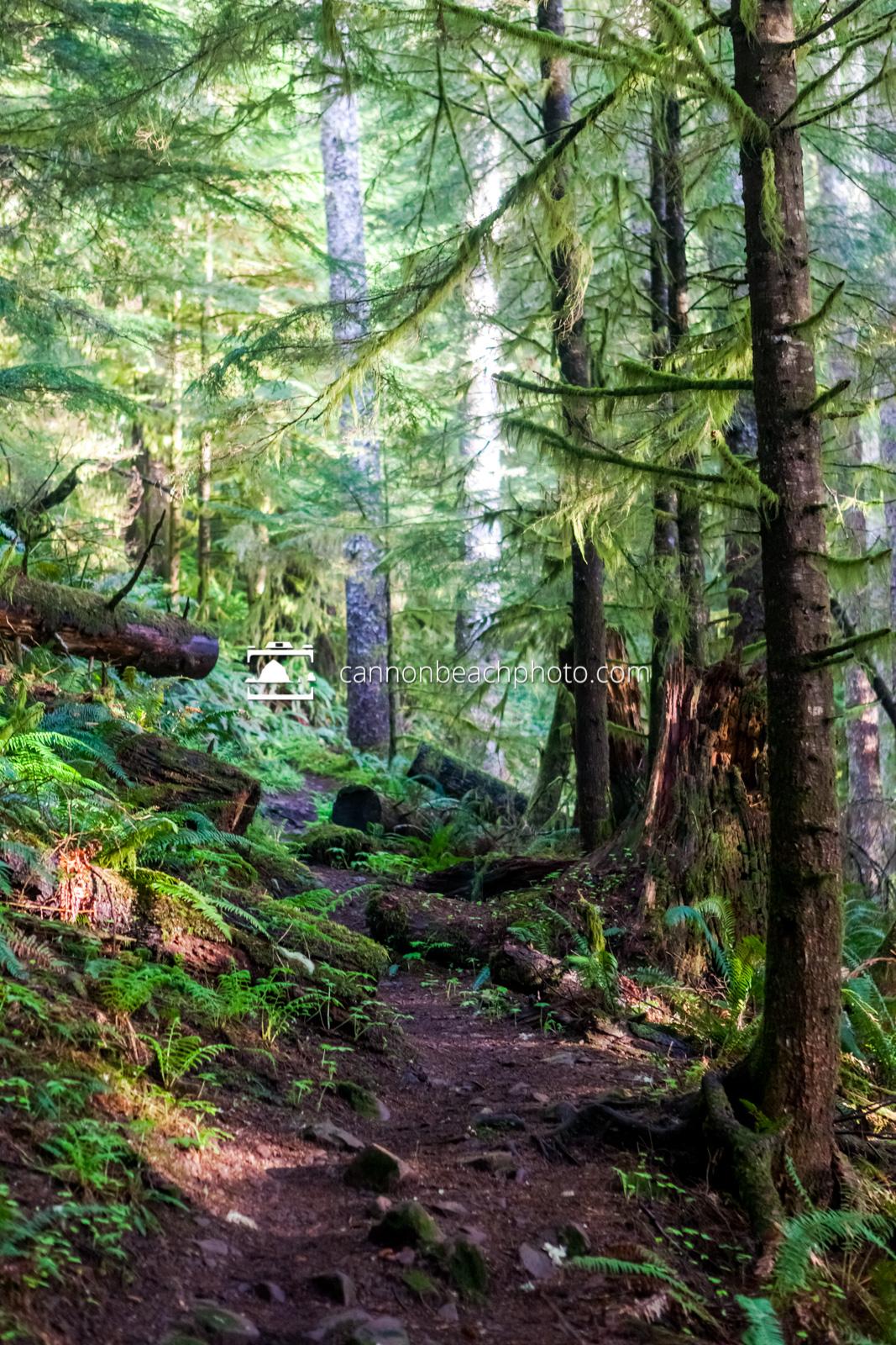 Neahkahnie Mountain Forest Trail 2