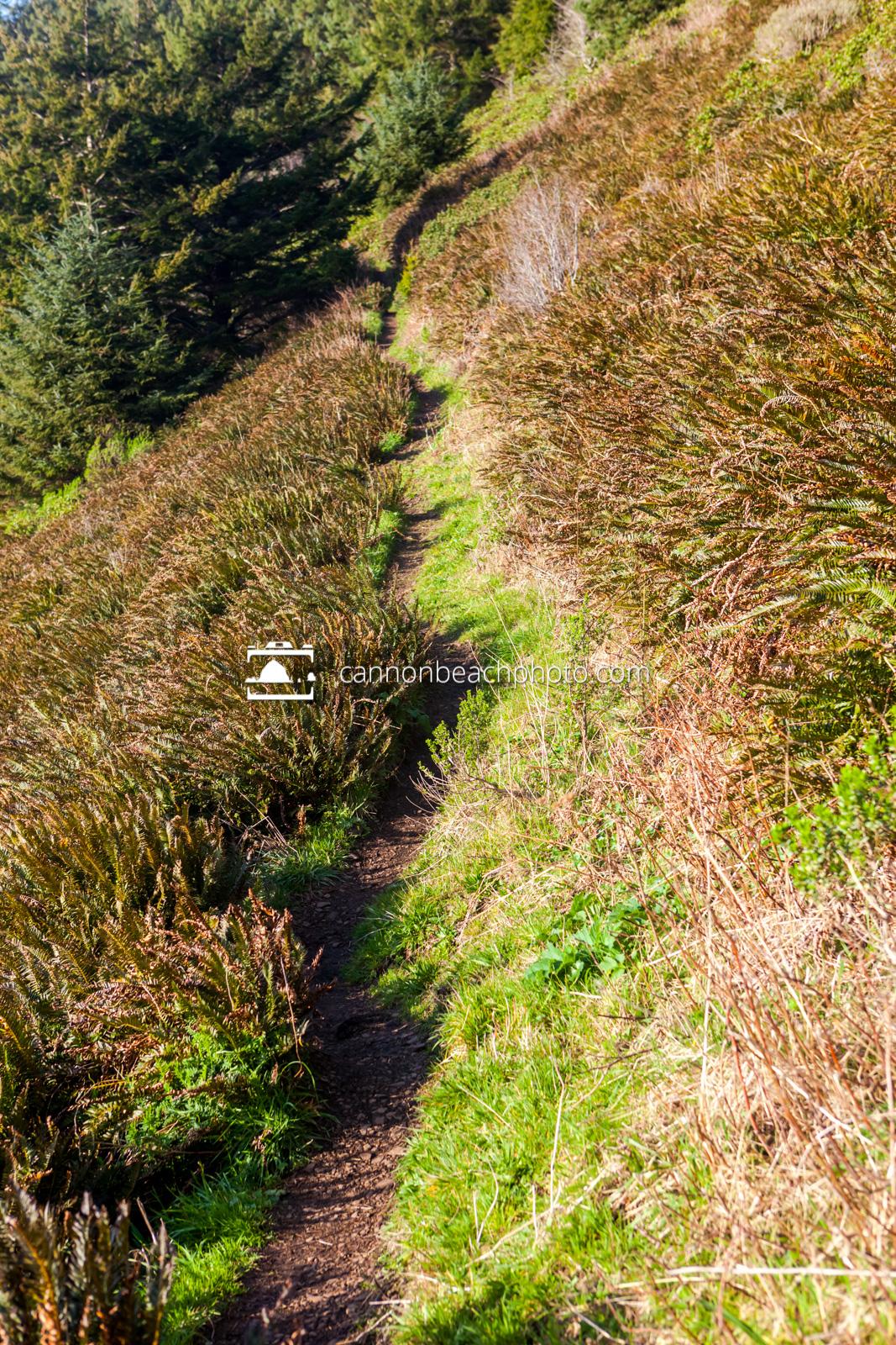 Trail up Neahkahnie Mountain, Vertical